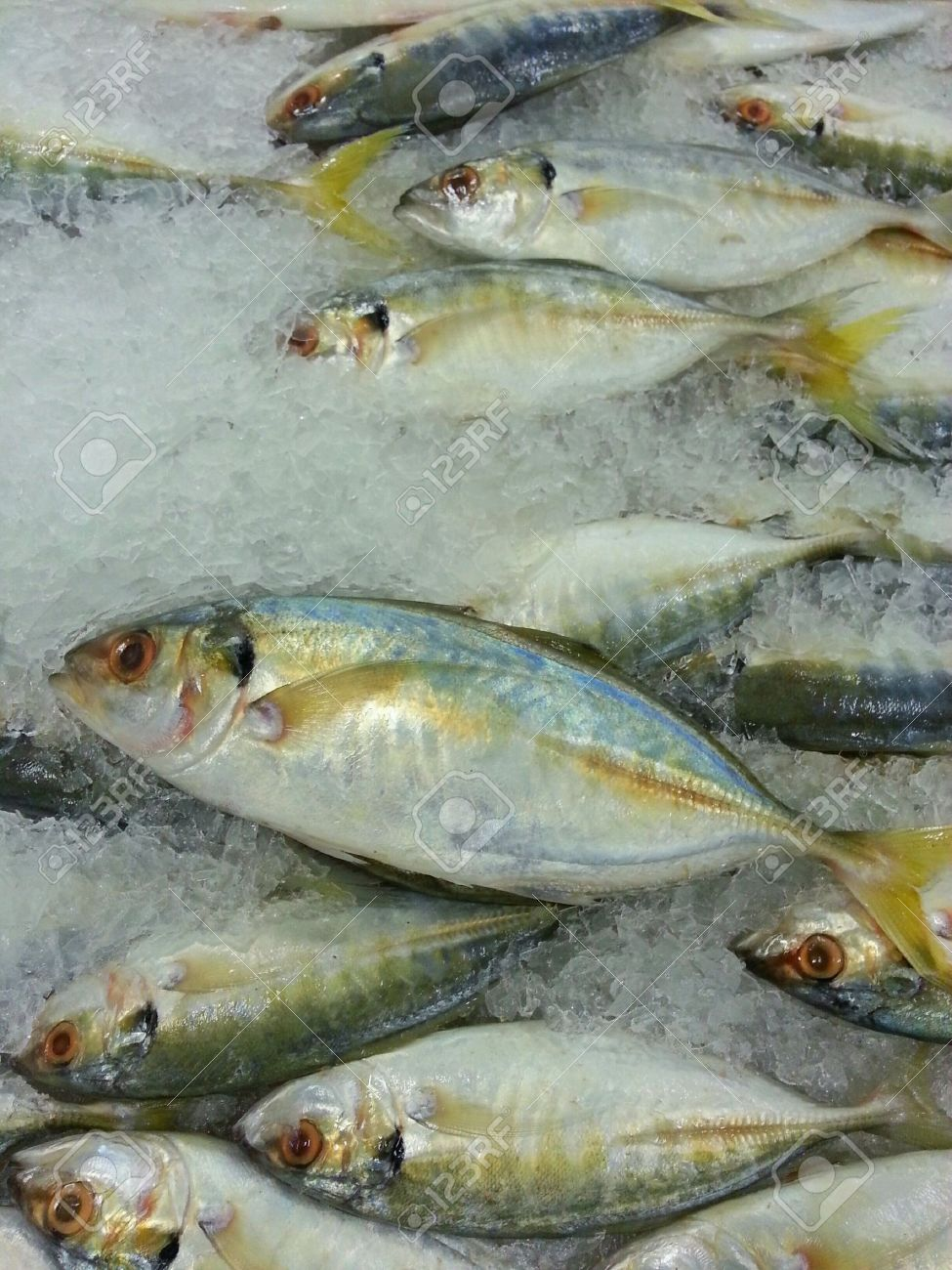 Yellowtail Scad Ikan Selar Kuning Being Sold In A Market Stock Photo Picture And Royalty Free Image Image 24001453