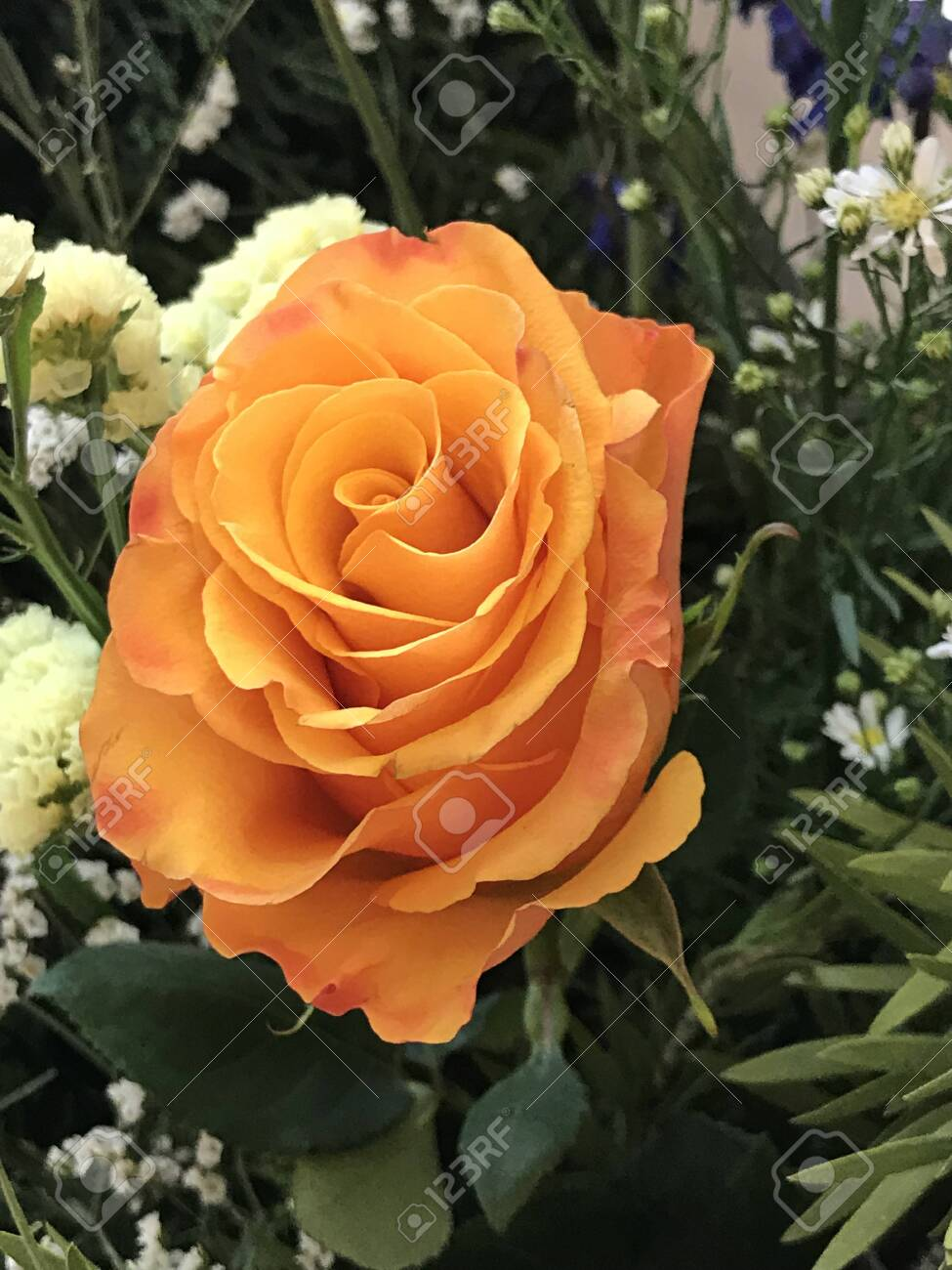 A Golden Yellow Rose Stand Out Among Variety Flowers Stock Photo