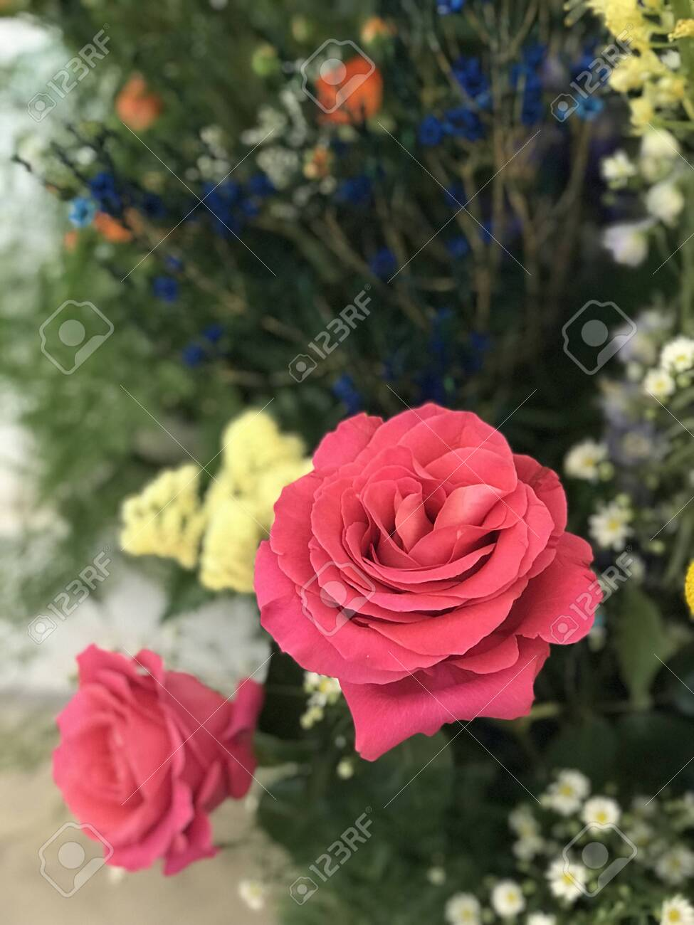 A Pink Rose Stand Out Among Variety Flowers Stock Photo Picture