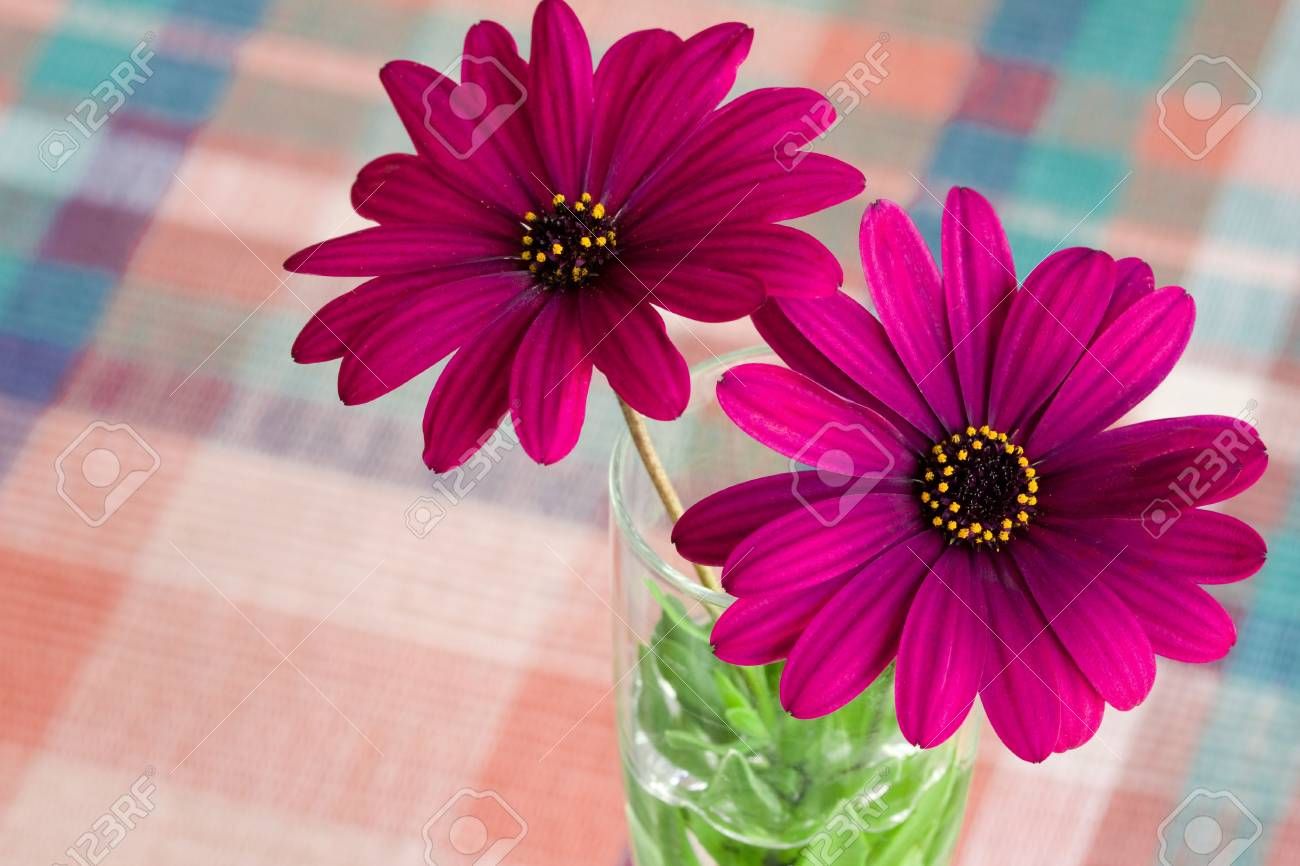 A close view of purple daisy flower in a vase fill with water stock a close view of purple daisy flower in a vase fill with water stock photo izmirmasajfo