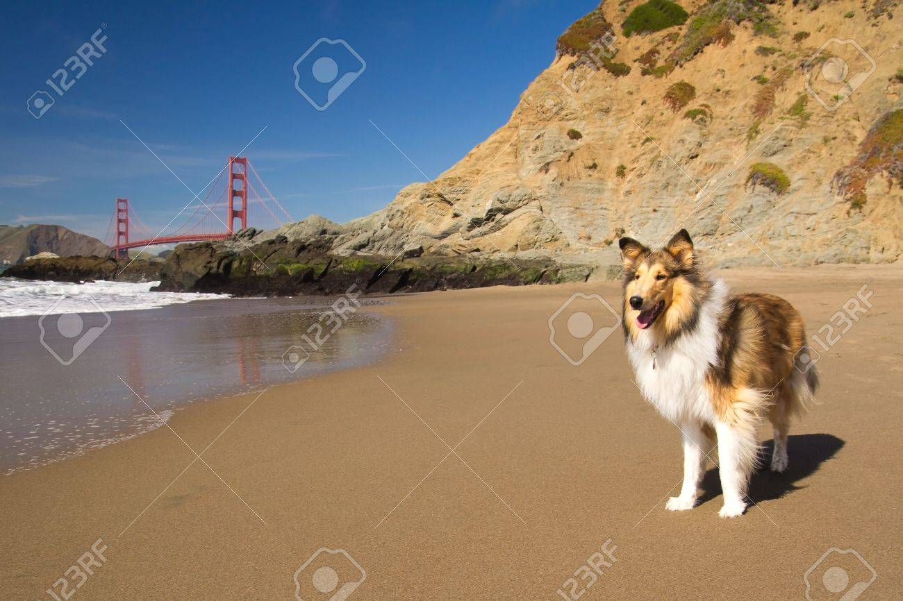 Dog on a beach with the Golden Gate Bridge in the background Stock Photo - 13387509