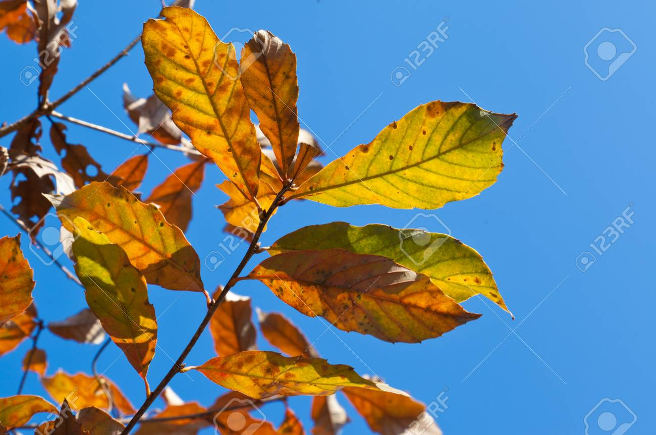 This is a photo of the leaves in early winter Stock Photo - 17238434