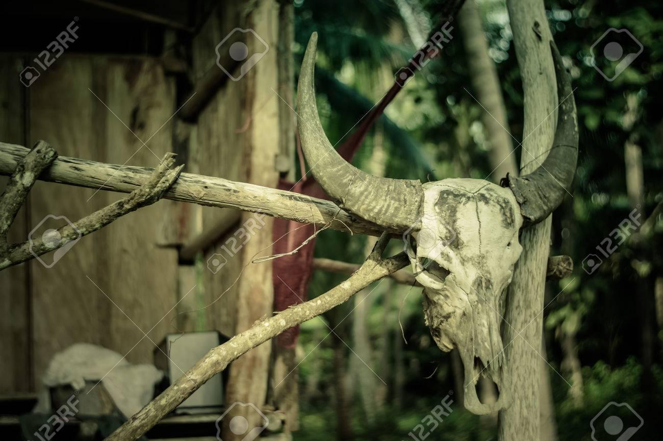 Crane De Bison Sur La Maison Abandonnee Banque D Images Et Photos Libres De Droits Image 24538720
