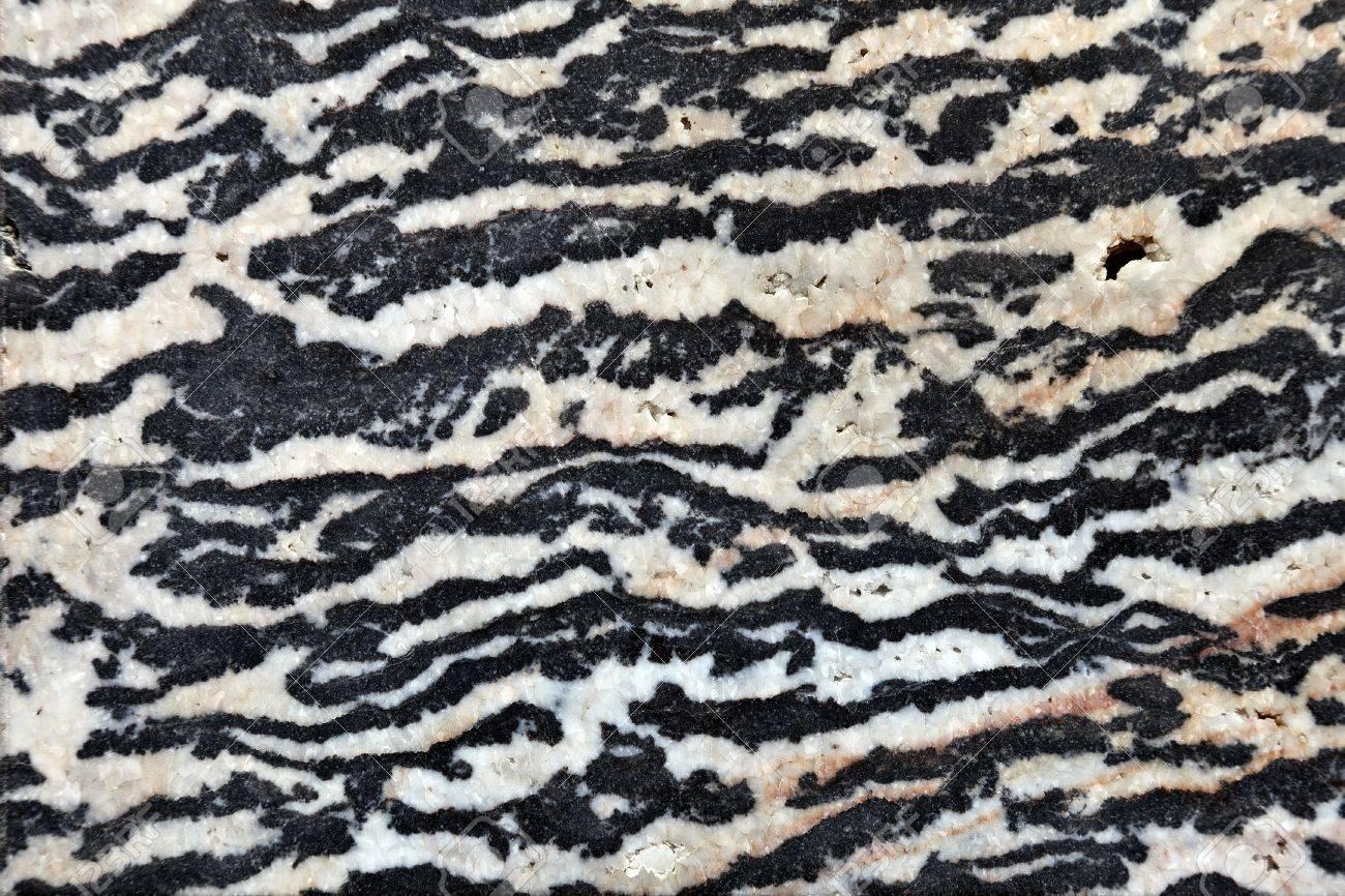 Utah Zebra Marble 500 Million Years Old