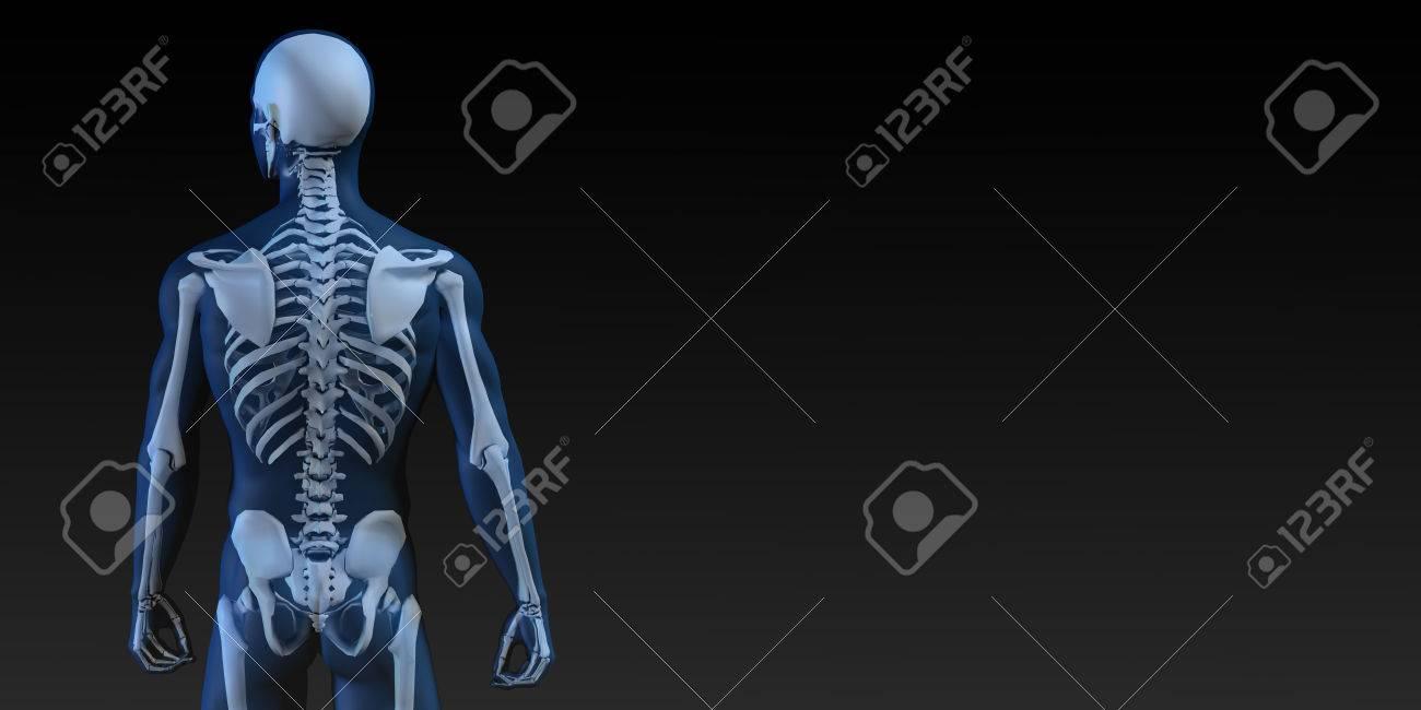 Único Anatomía ósea Humana Foto - Imágenes de Anatomía Humana ...