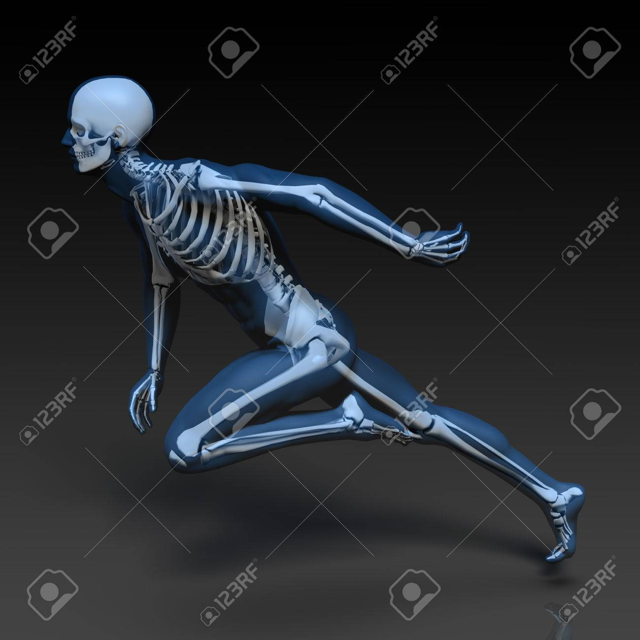 Human Bone Structure Diagram In Blue And Black Stock Photo Picture