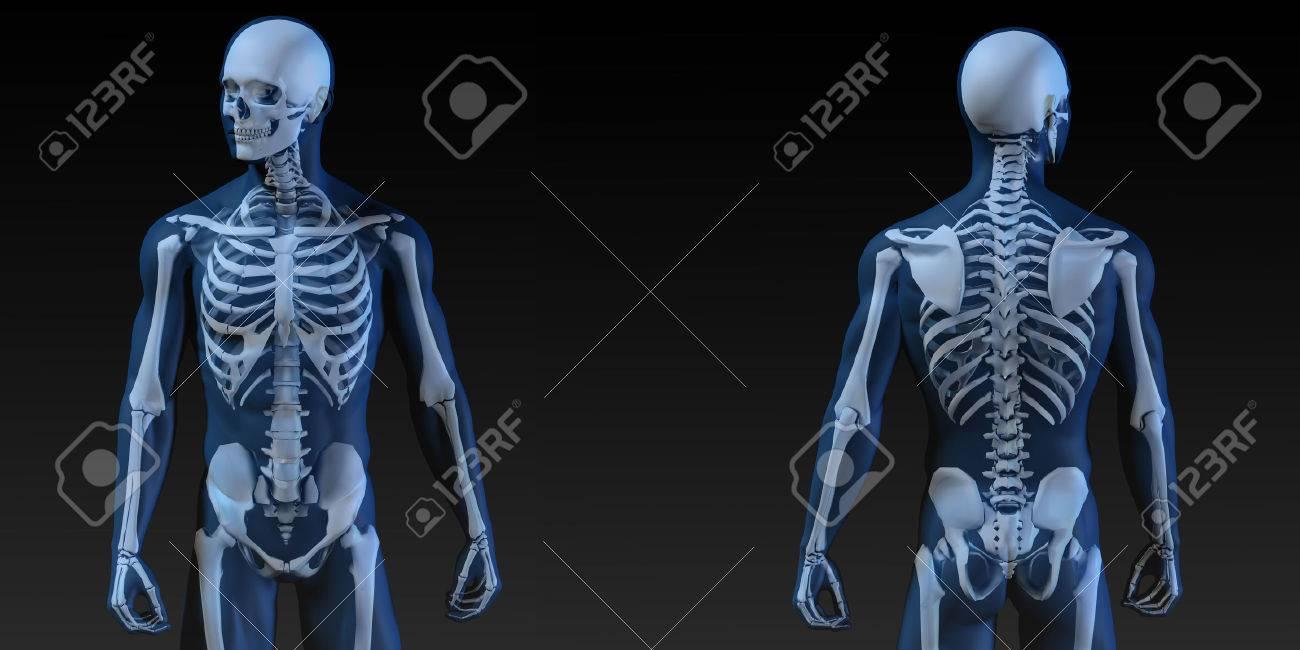 Ilustración Médica Del Cuerpo Humano Y Huesos Como Arte Fotos ...