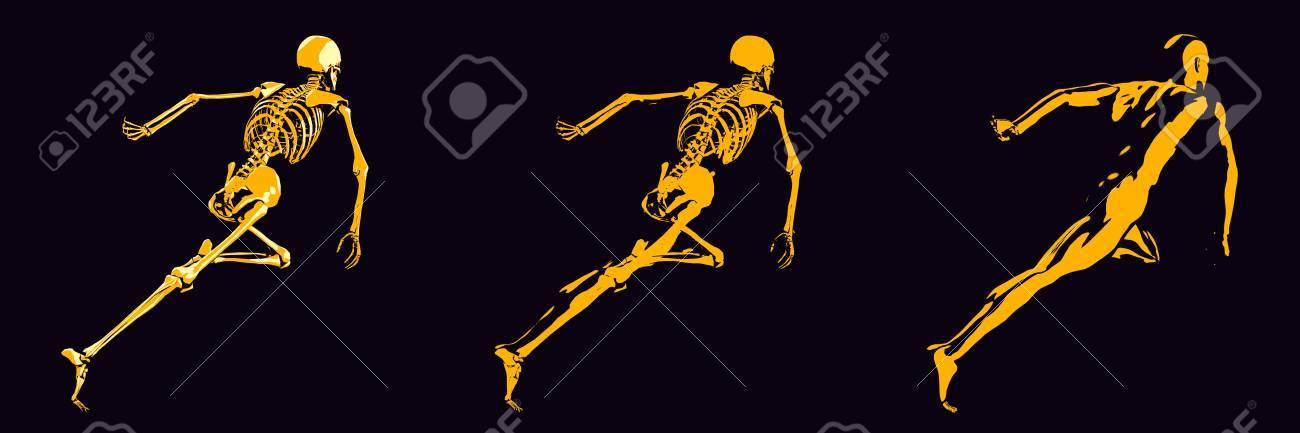 Estructura ósea Humana Diagrama De Naranja Y Negro Fotos, Retratos ...
