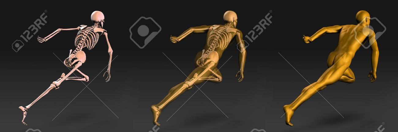 Medizinische Abbildung Des Menschlichen Körpers Und Knochen Als ...