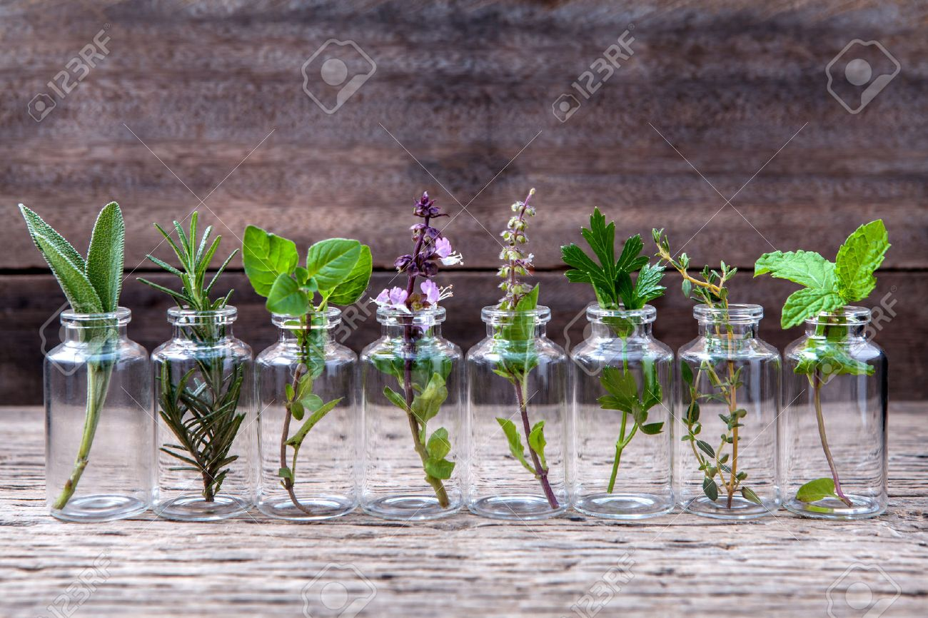 Bottle of essential oil with herbs holy basil flower, basil flower,rosemary,oregano, sage,parsley ,thyme and mint set up on old wooden background . - 51663211