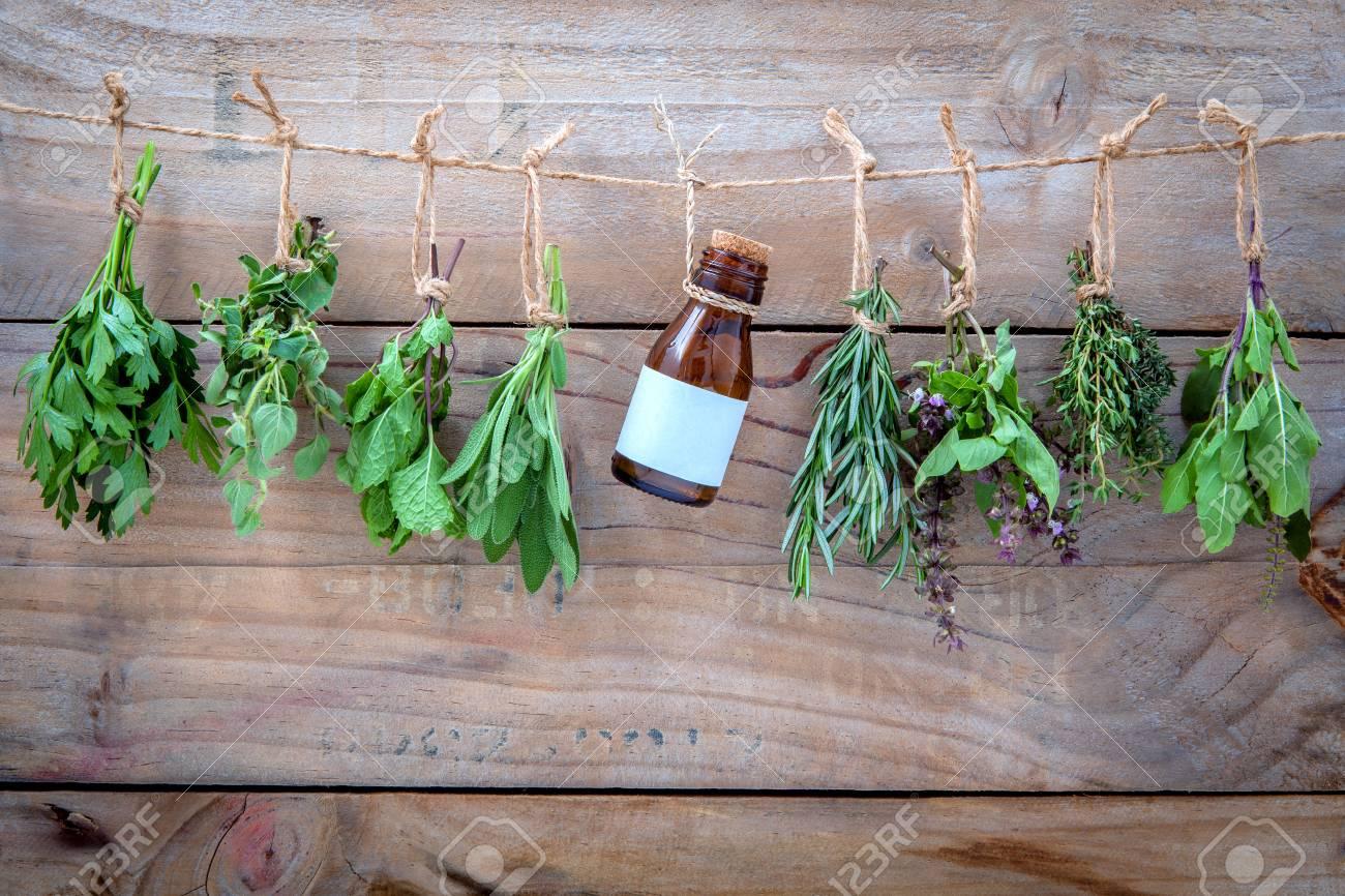 Assorted hanging herbs - 52964768