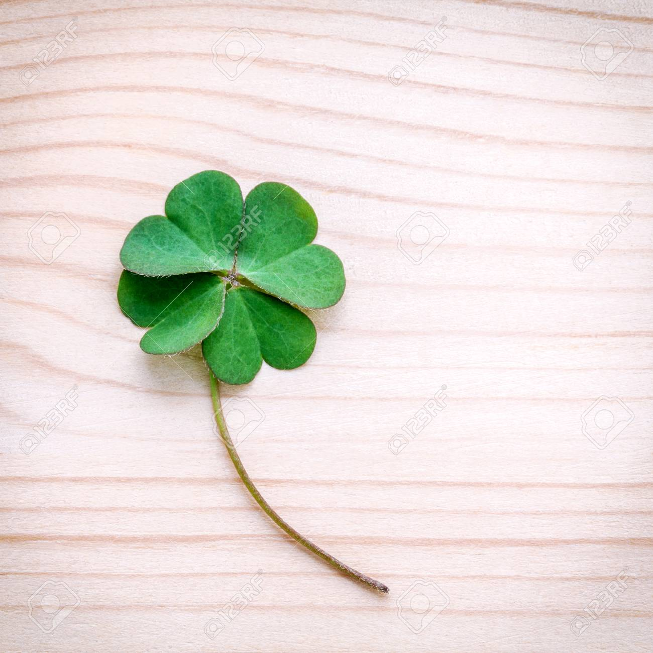 Clovers Leaves On Stone E Symbolic Of Four Leaf Clover The