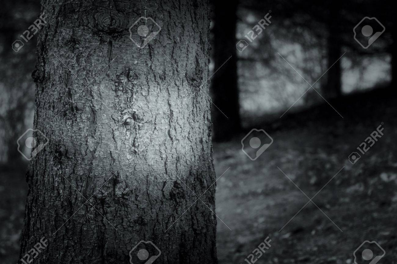 dark forest Stock Photo - 11909476