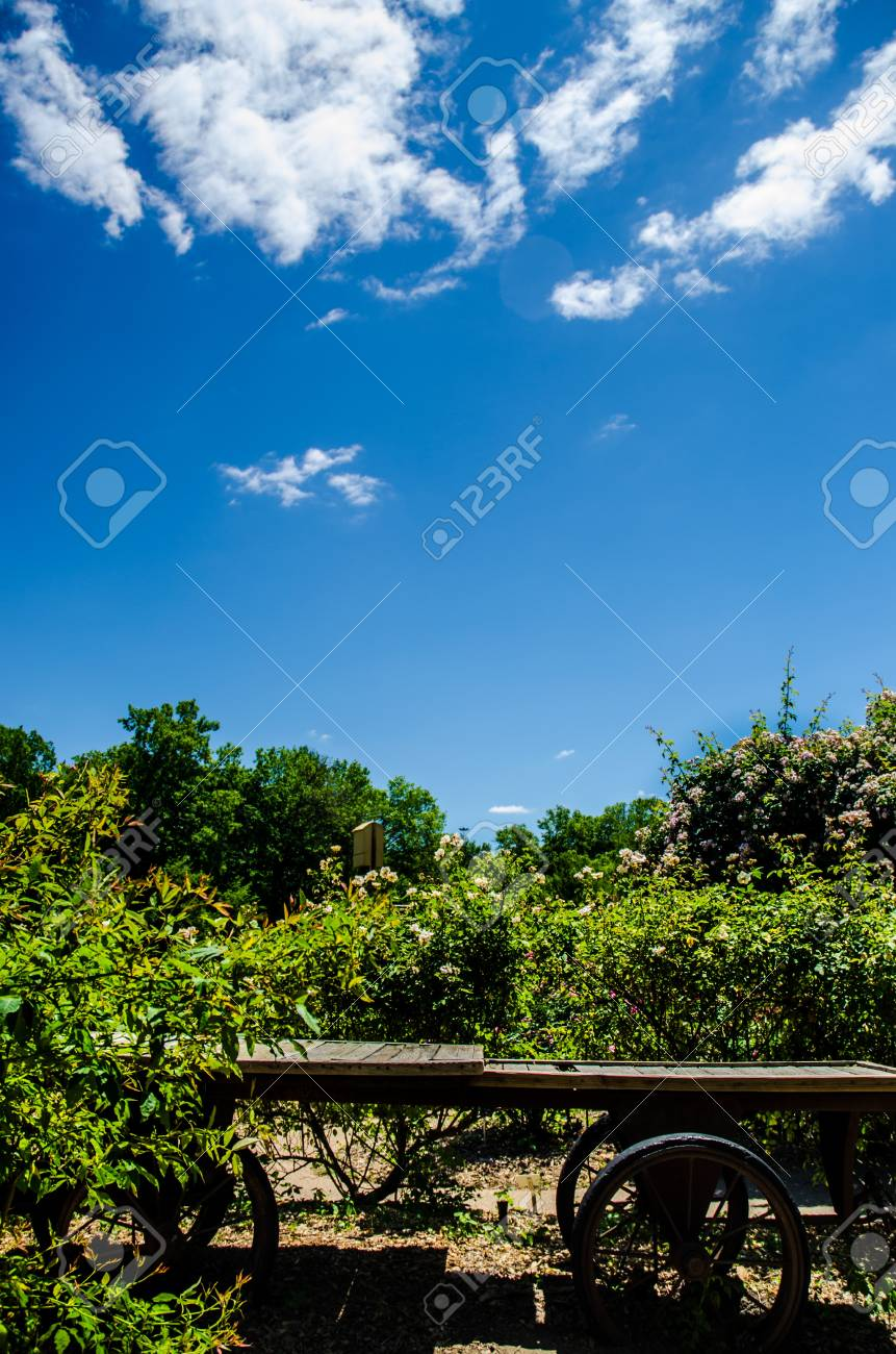 Rustic Wagon in Rose Garden Under a Blue Sky with White Clouds Stock Photo - 19696727