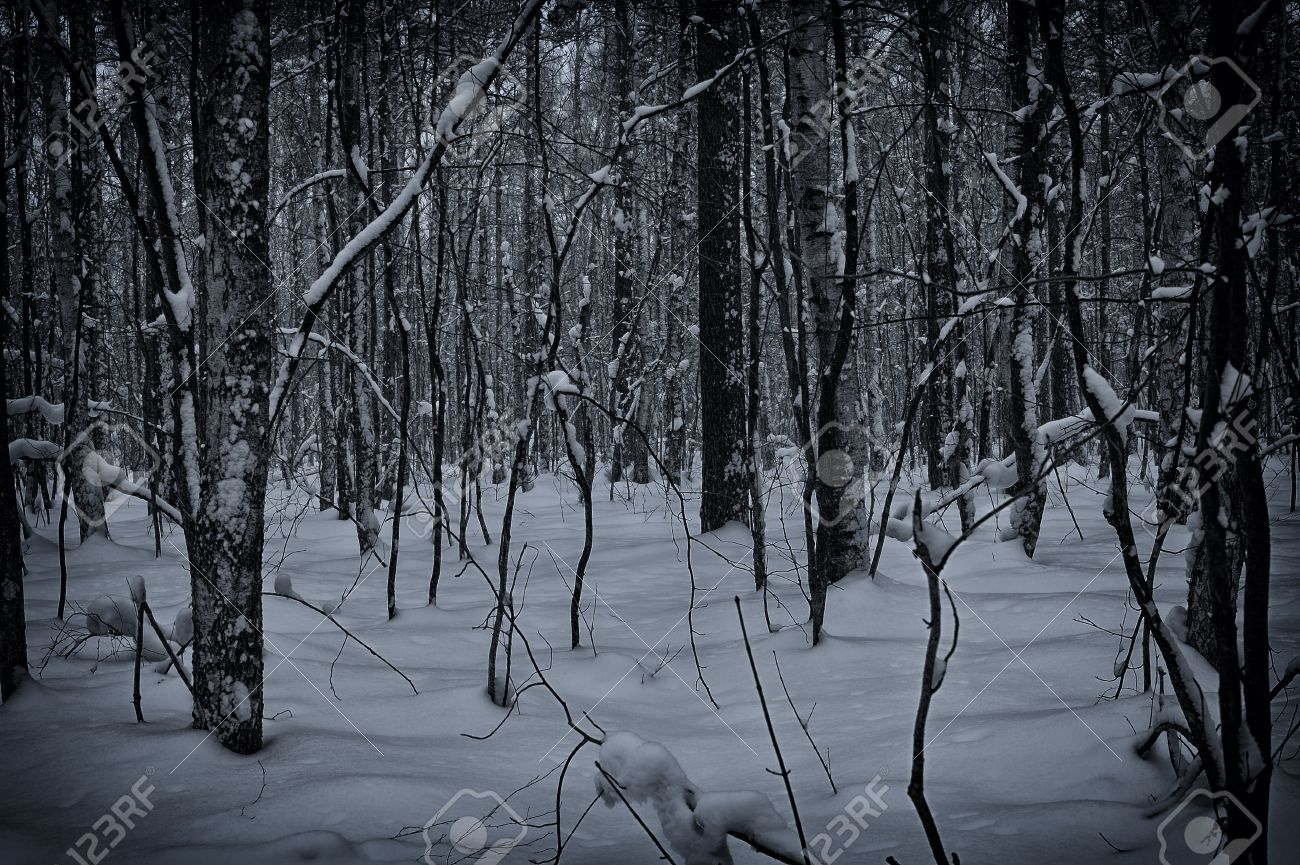dark and snowy winter forest background stock photo picture and