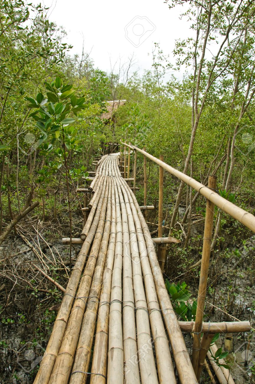 Bamboo walkway in Mangrove forest at Petchabuti, Thailand Stock Photo - 10279706