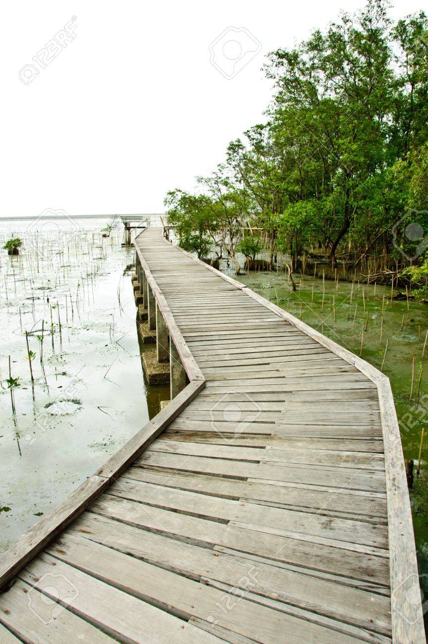 Wooden walkway in Mangrove forest at Petchabuti, Thailand Stock Photo - 10279697