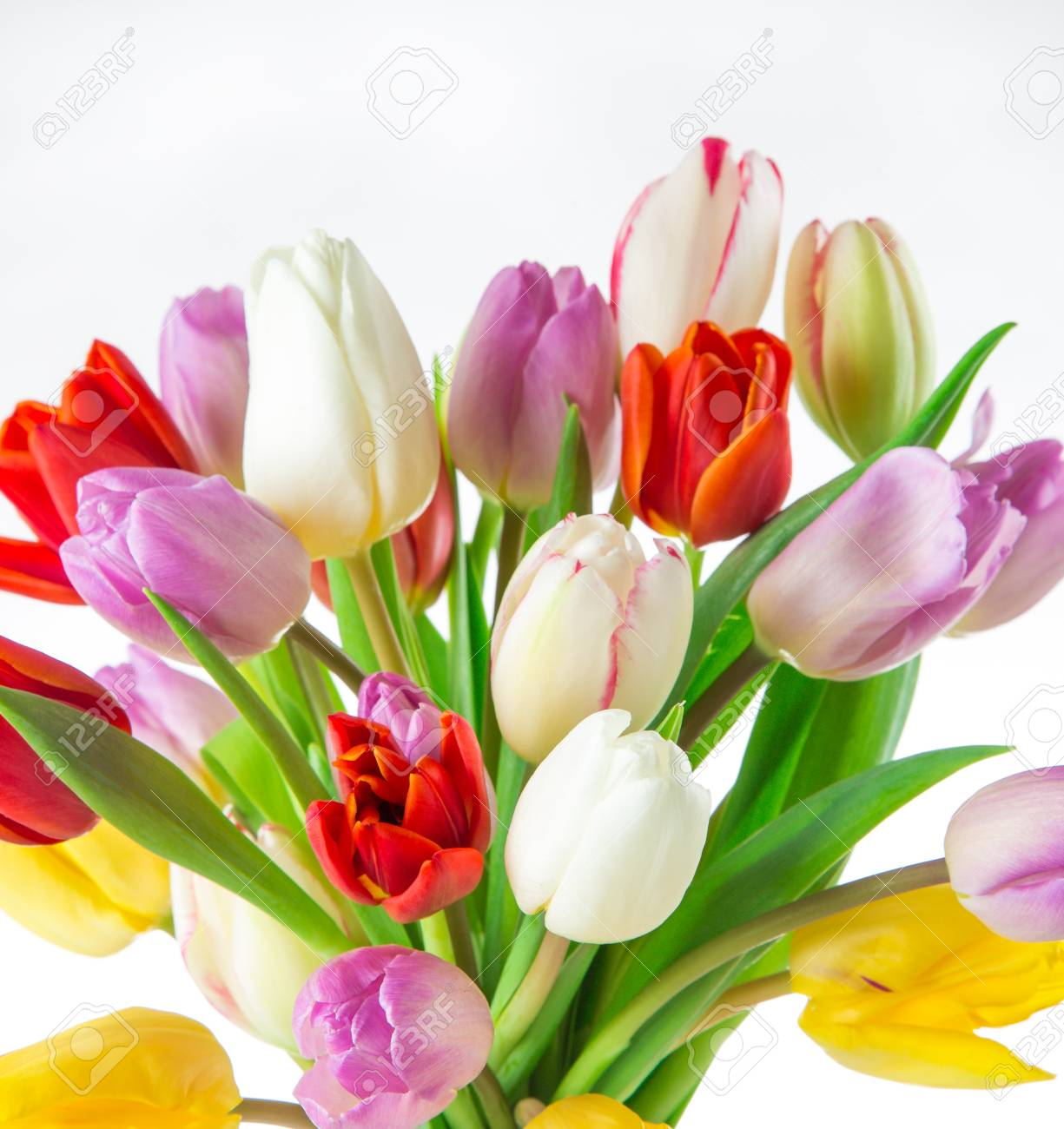 Tulips Over White Background Bouquet Of Spring Easter Flowers