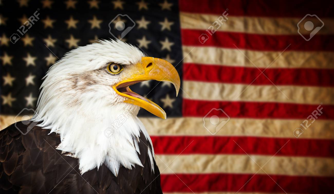 American Bald Eagle Symbol Of America With Flag United States