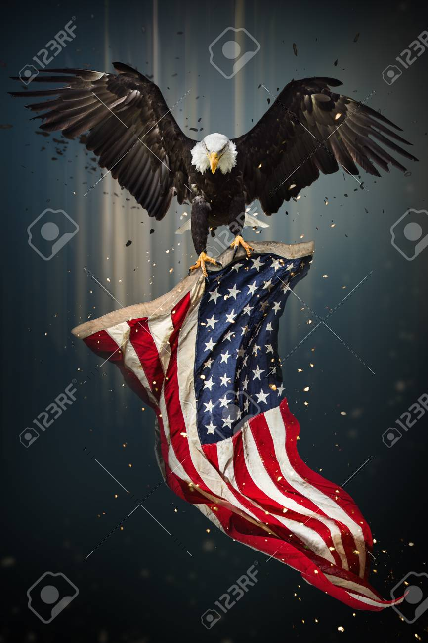 American Bald Eagle Flying Symbol Of America With Flag United