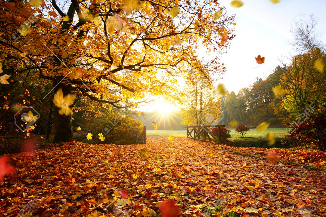Autumn forest. Beautiful rural scenery. - 108998696