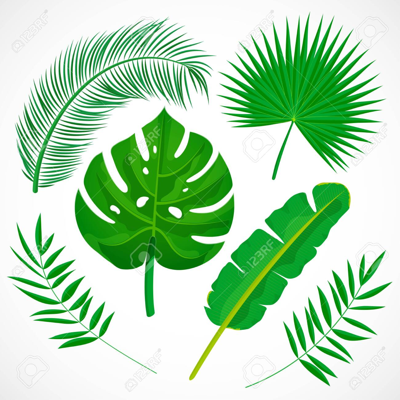 Flat Palm Leaves Set Tropical Plants Icons Collection Banana Royalty Free Cliparts Vectors And Stock Illustration Image 121428407 High quality jpg included.under commons 4.0. flat palm leaves set tropical plants icons collection banana
