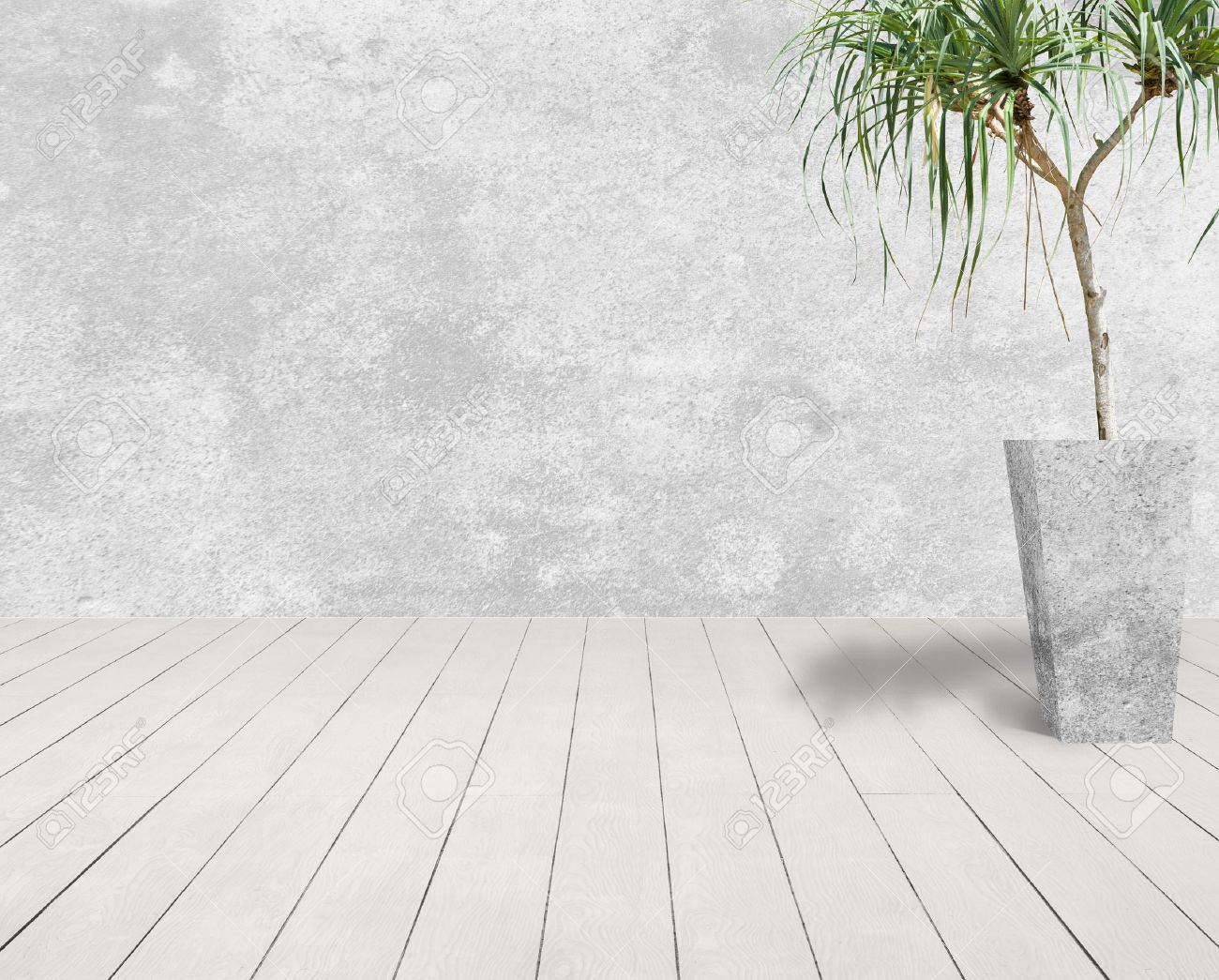white grunge cement wall and white wood floor with tree in cement pot. Standard-Bild - 23879414