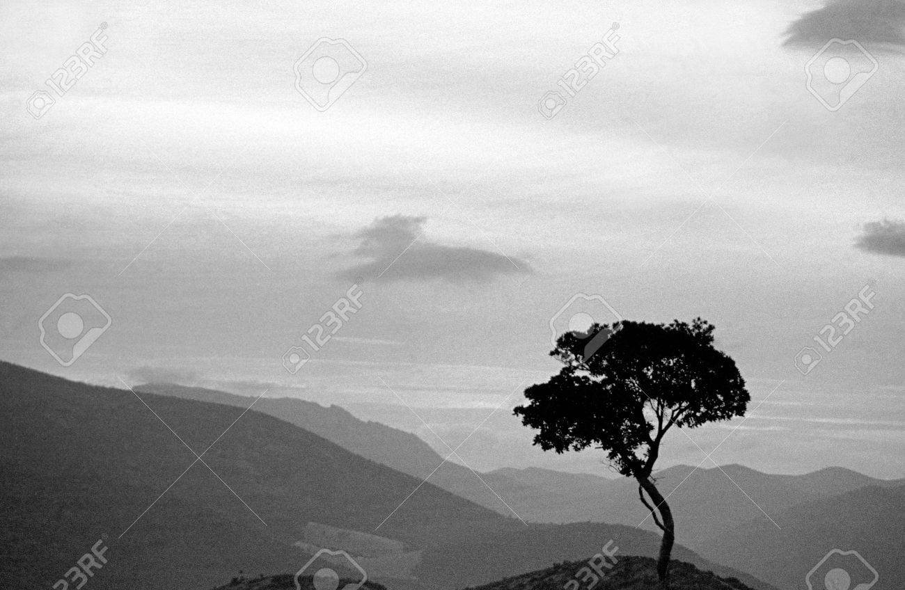 Olive Tree in South of Spain Stock Photo - 7273643