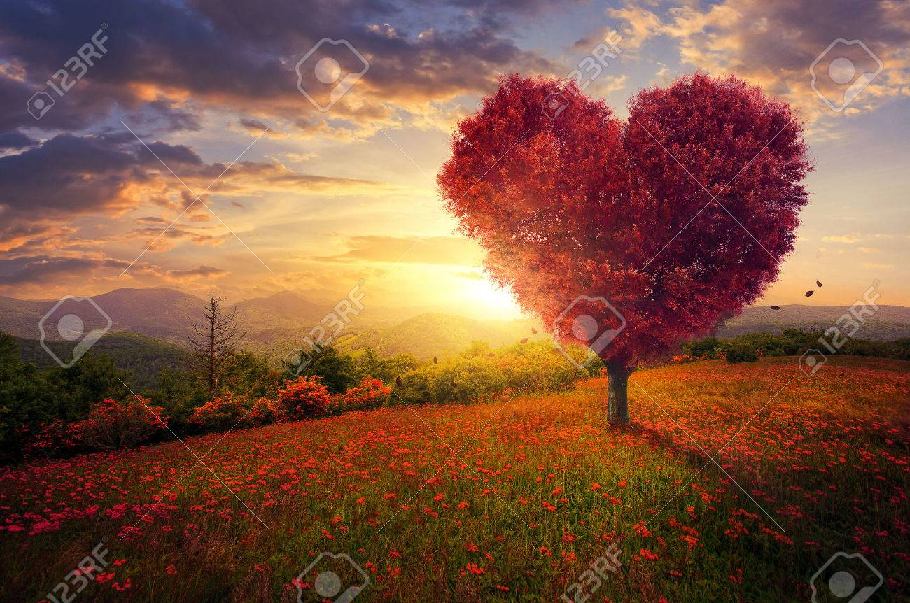 A red heart shaped tree at sunset. - 54757891