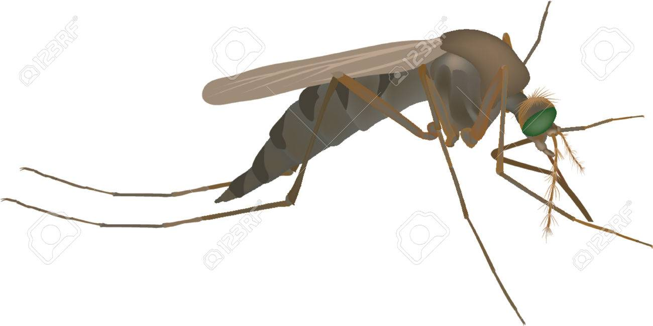Mosquito Royalty Free Cliparts, Vectors, And Stock Illustration. Image 557420. mosquito - 웹