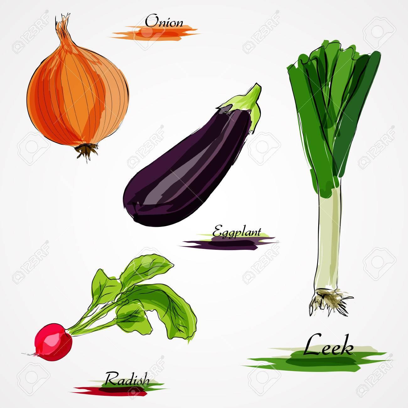 Set of hand drawn vector ripe whole vegetables, llek, white onion, eggplant and radish on light background - 46570740