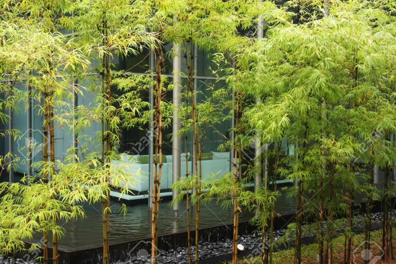 Modernes Haus Mit Zen-Dekor Bambus Grün Und Wasser Lizenzfreie Fotos ...