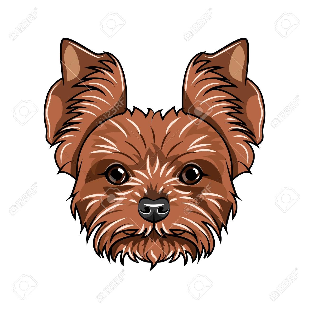Yorkshire Terrier Head Vector Illustration Royalty Free Cliparts
