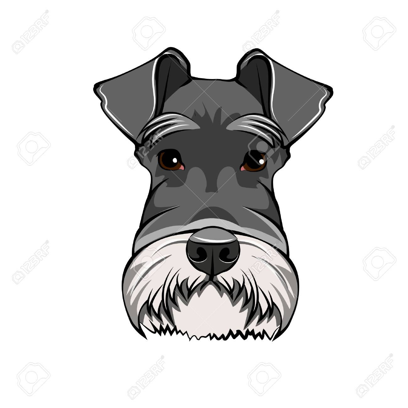 Schnauzer Dog Portrait. Dog Head, Face, Muzzle. Dog Breed Vector ...