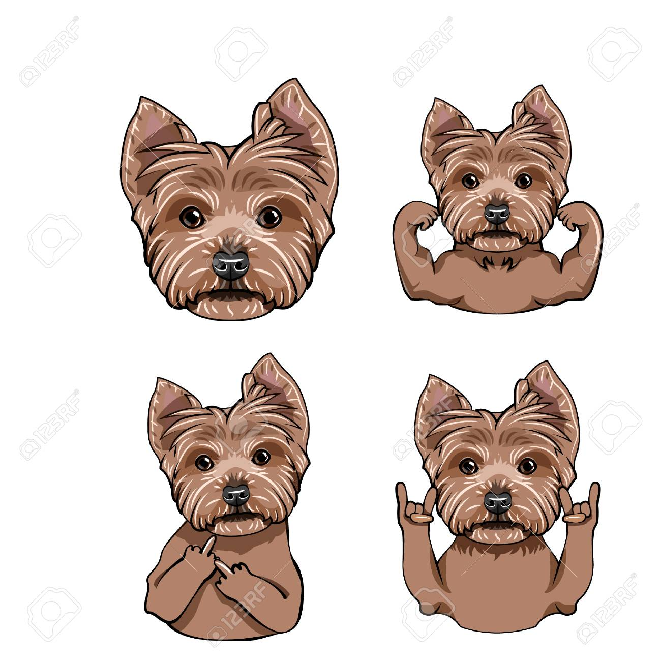 Yorkshire Terrier Dog Collection Vector Illustration Royalty Free