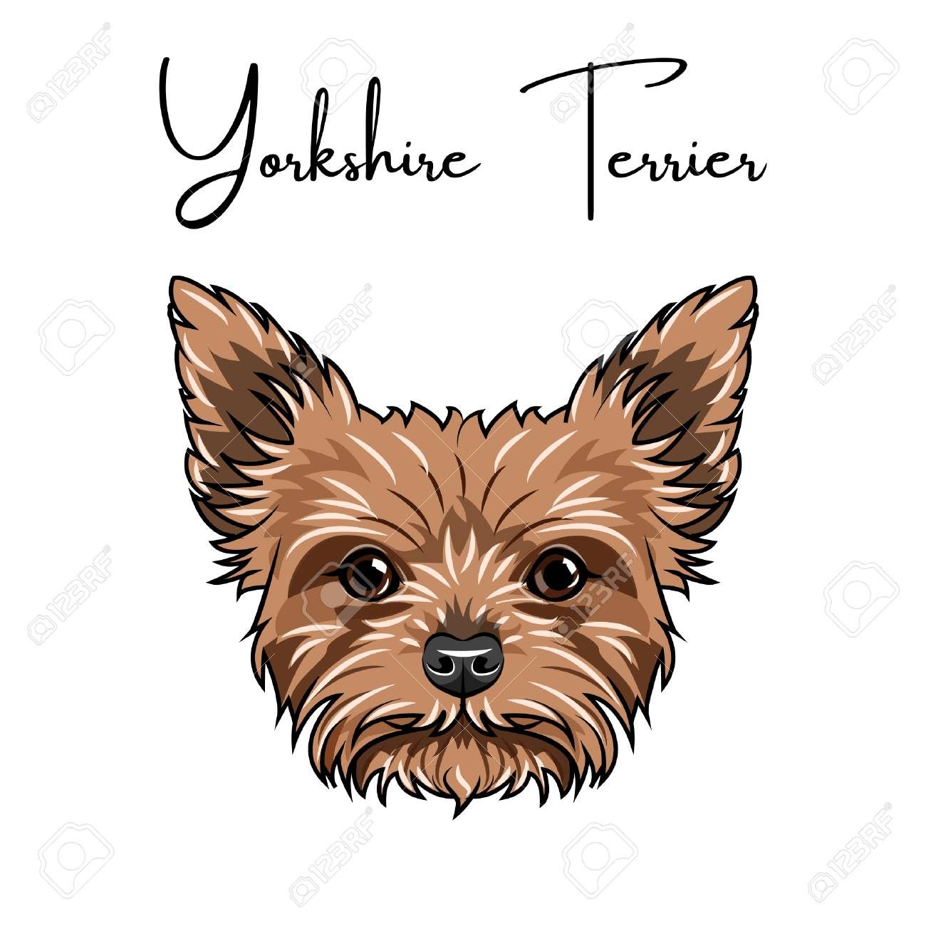 Yorkshire Terrier Portrait Vector Illustration Royalty Free Cliparts