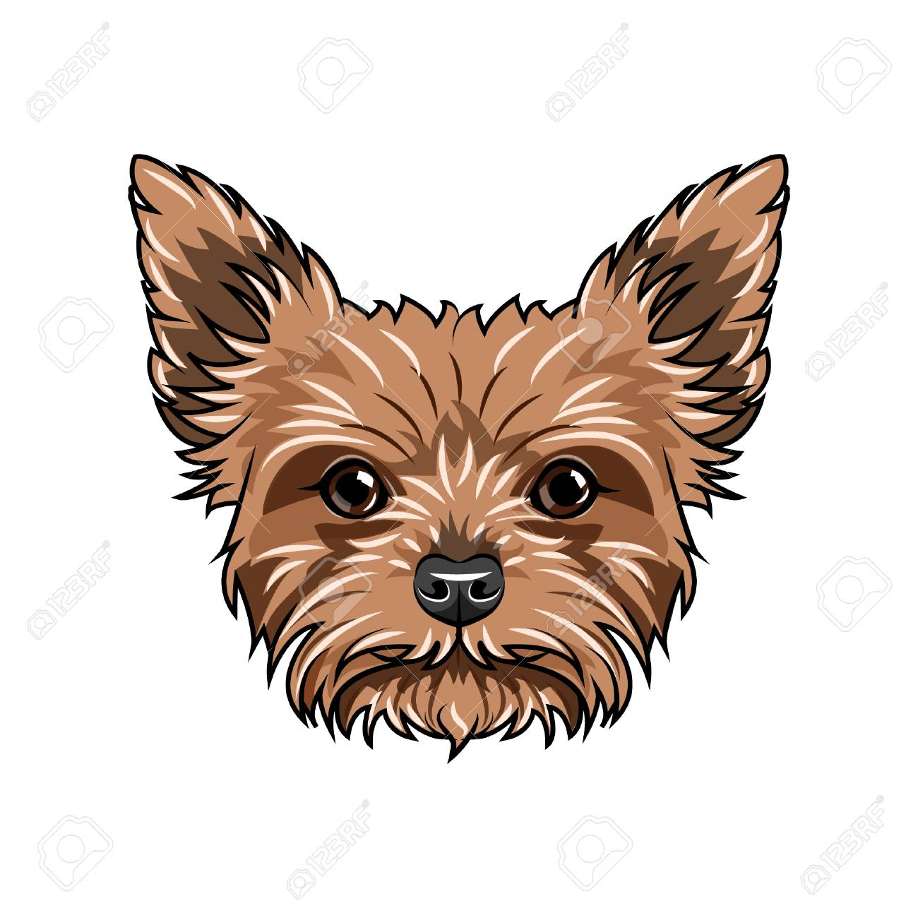 Yorkshire Terrier Dog Portrait Dog Face Head Muzzle Yorkshire Royalty Free Cliparts Vectors And Stock Illustration Image 100612113