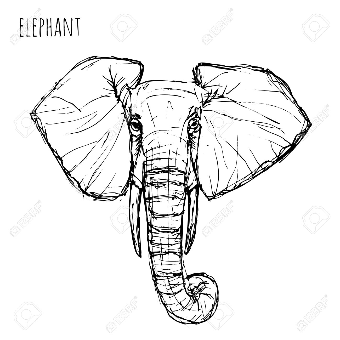 Vector wild animal black and white elephant face drawn pen and ink on a white background vector illustration