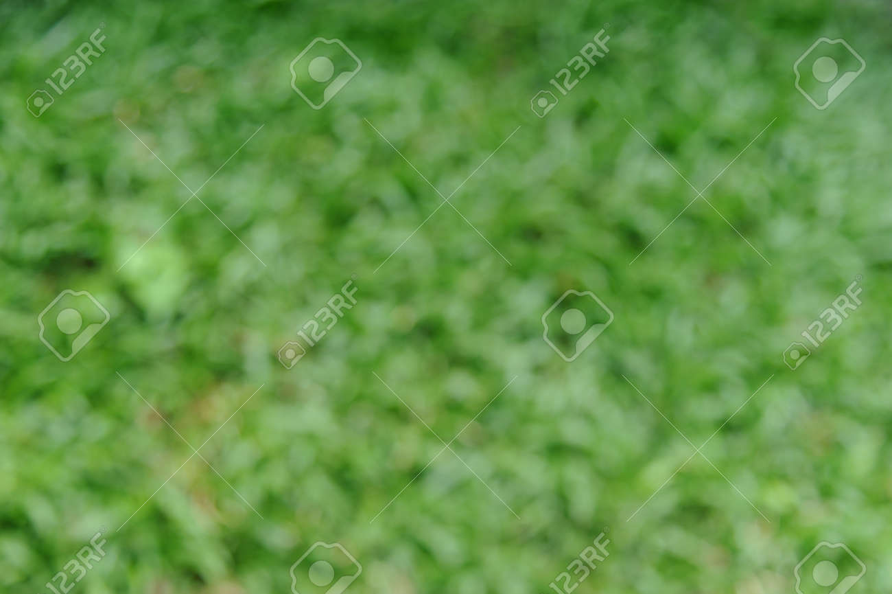 Blur background of bright green grass. Natural-look for backdrop or background - 165650677