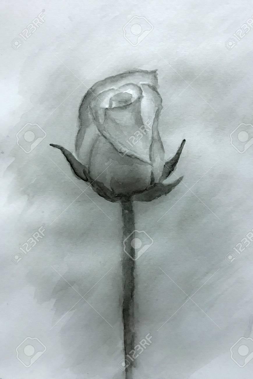Single Black Rose Watercolor Painted Watercolor Rose Original