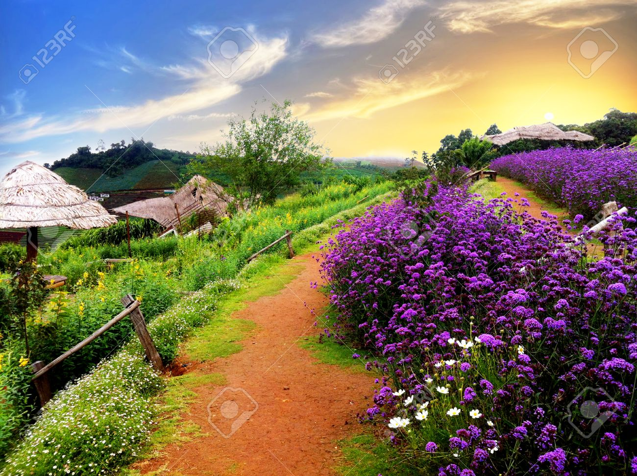 Beautiful Scenery Of Flowers And Mountain Stock Photo Picture And Royalty Free Image Image 30166965
