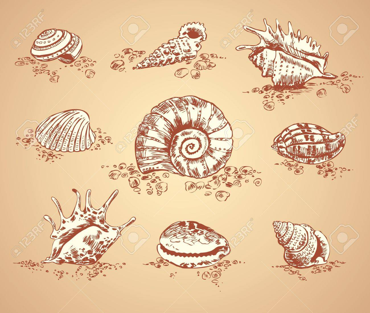 Collection graphic images seashell, vector set Stock Vector - 16741448