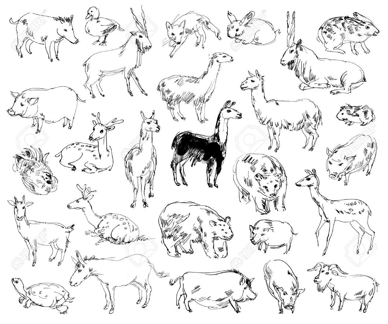 Uncategorized Wild Animal Drawing wild animals zoo set hand drawn stock photo picture and 24723116