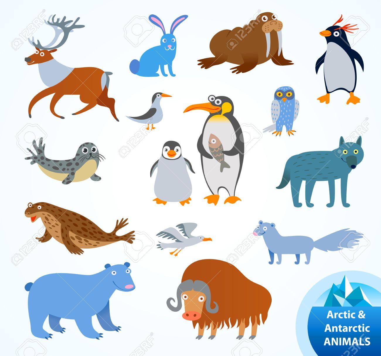 Set funny Arctic and Antarctic animals. Penguin, polar bear, seal, walrus, arctic fox, musk-ox, hare, reindeer, wolf, snowy owl, albatross, arctic tern. Funny cartoon character. Vector illustration - 50123136