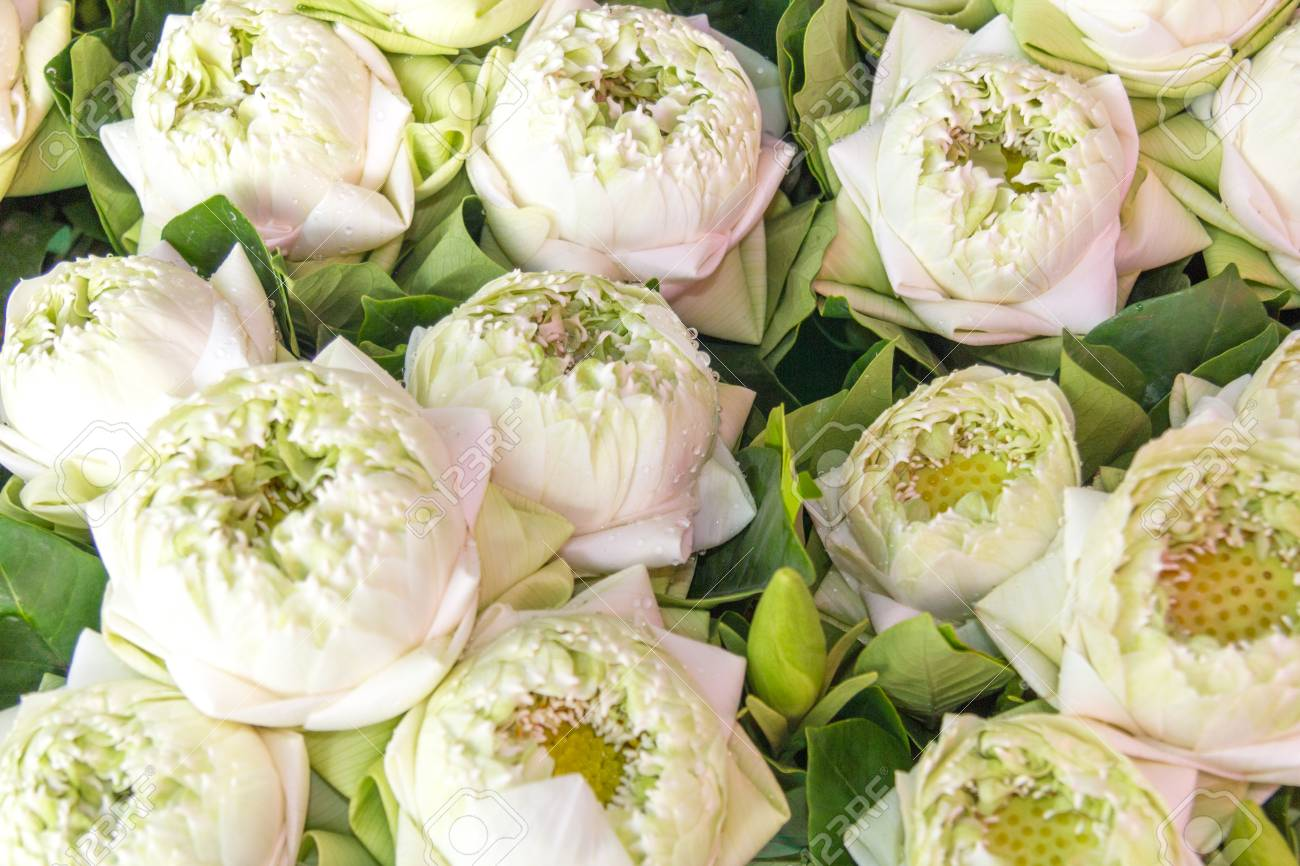 Lotus Flowers On Sale At Pk Khlong Talat Flower Market In Bangkok