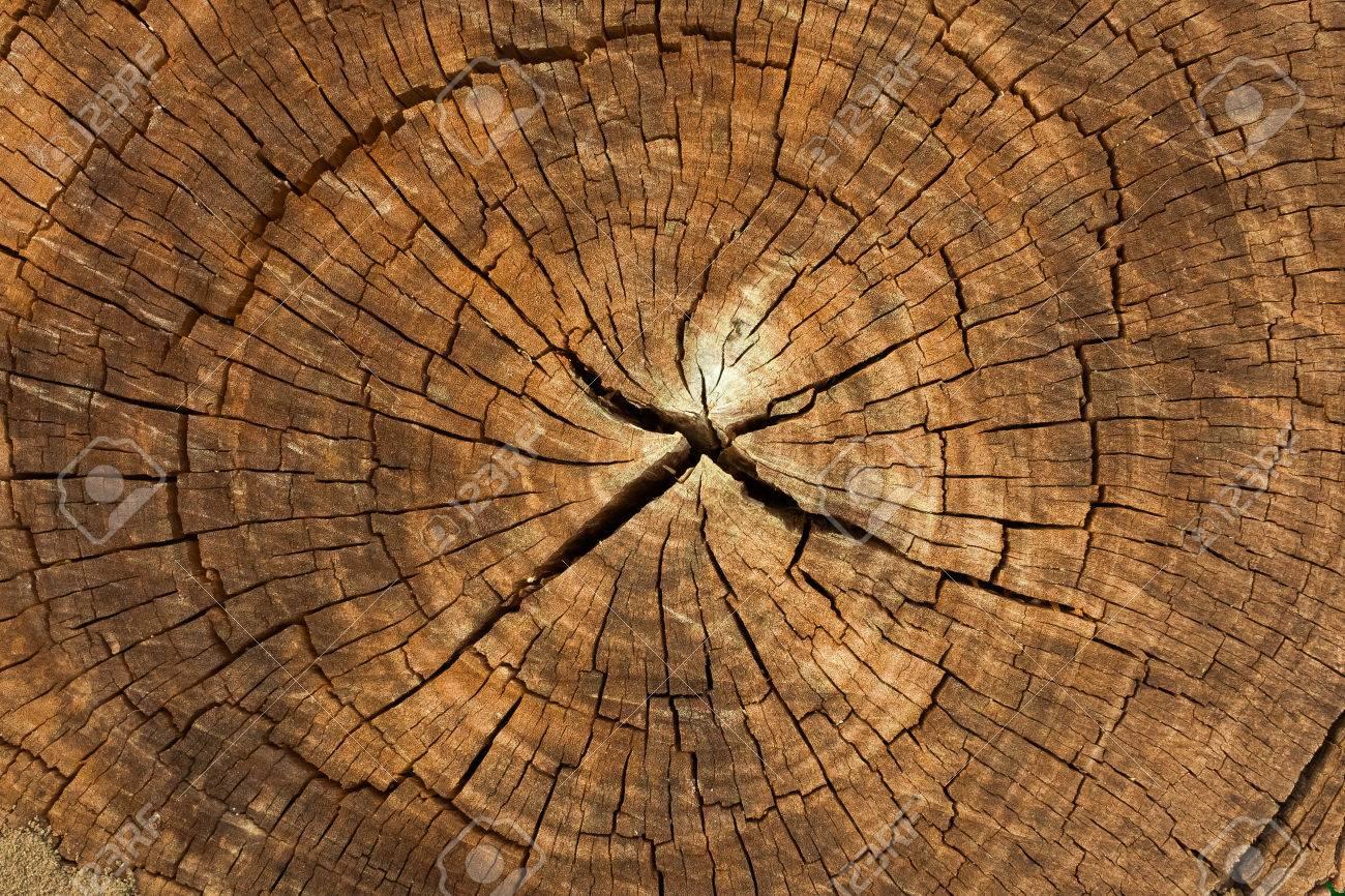 Dark brown tree trunk texture or background - 55566856