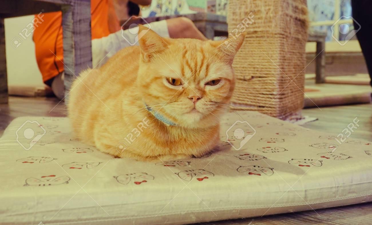 jolies photos de chatte gros poilu chatte baisée