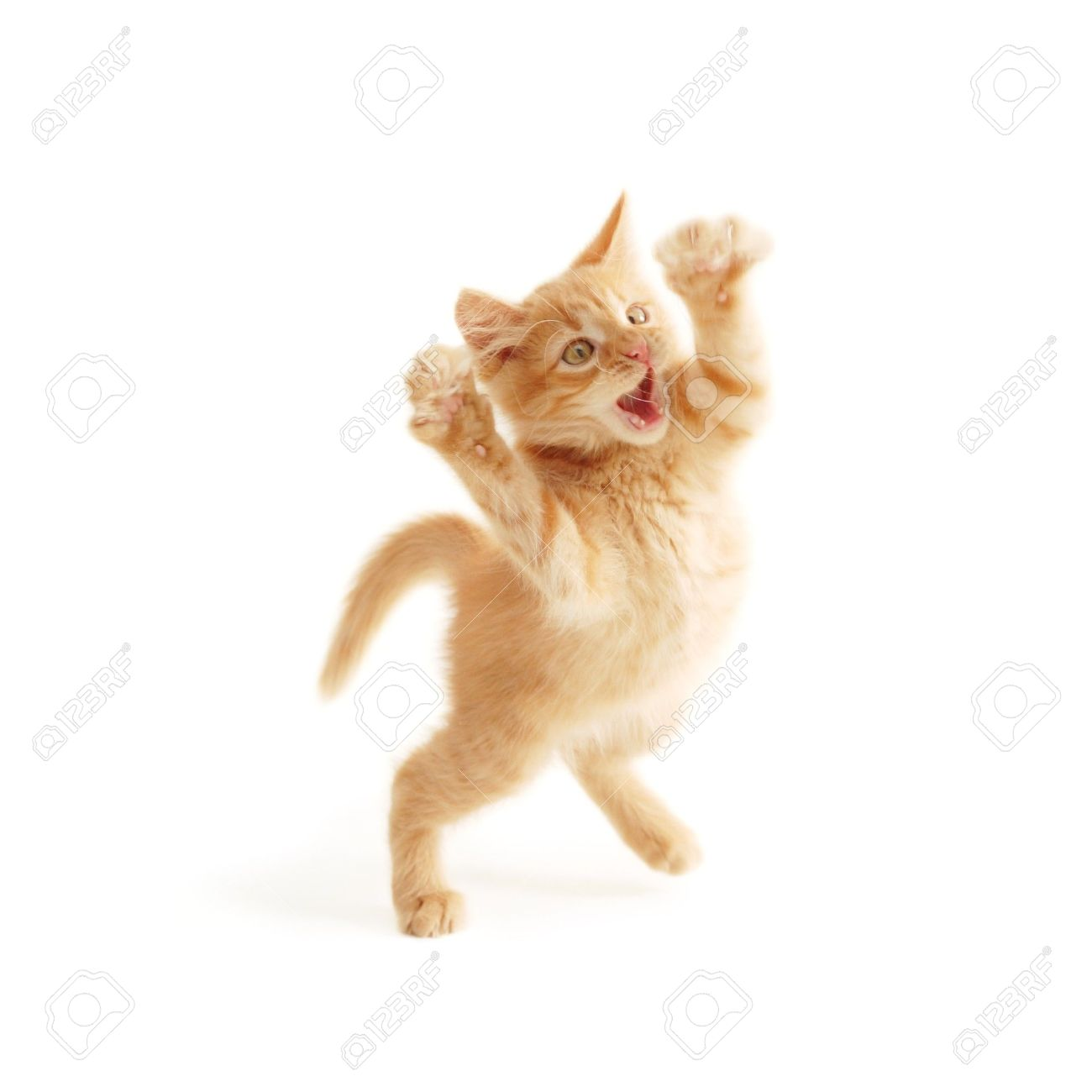 kitten jumping isolated on white background Stock Photo - 7545555