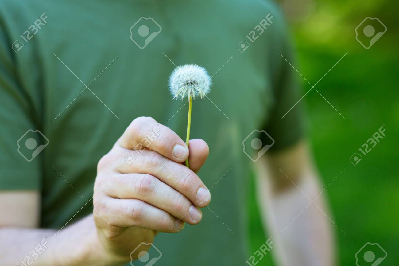 Dandelion flower over vivid green grass background man holding dandelion flower over vivid green grass background man holding white dandelion ready to blow mightylinksfo
