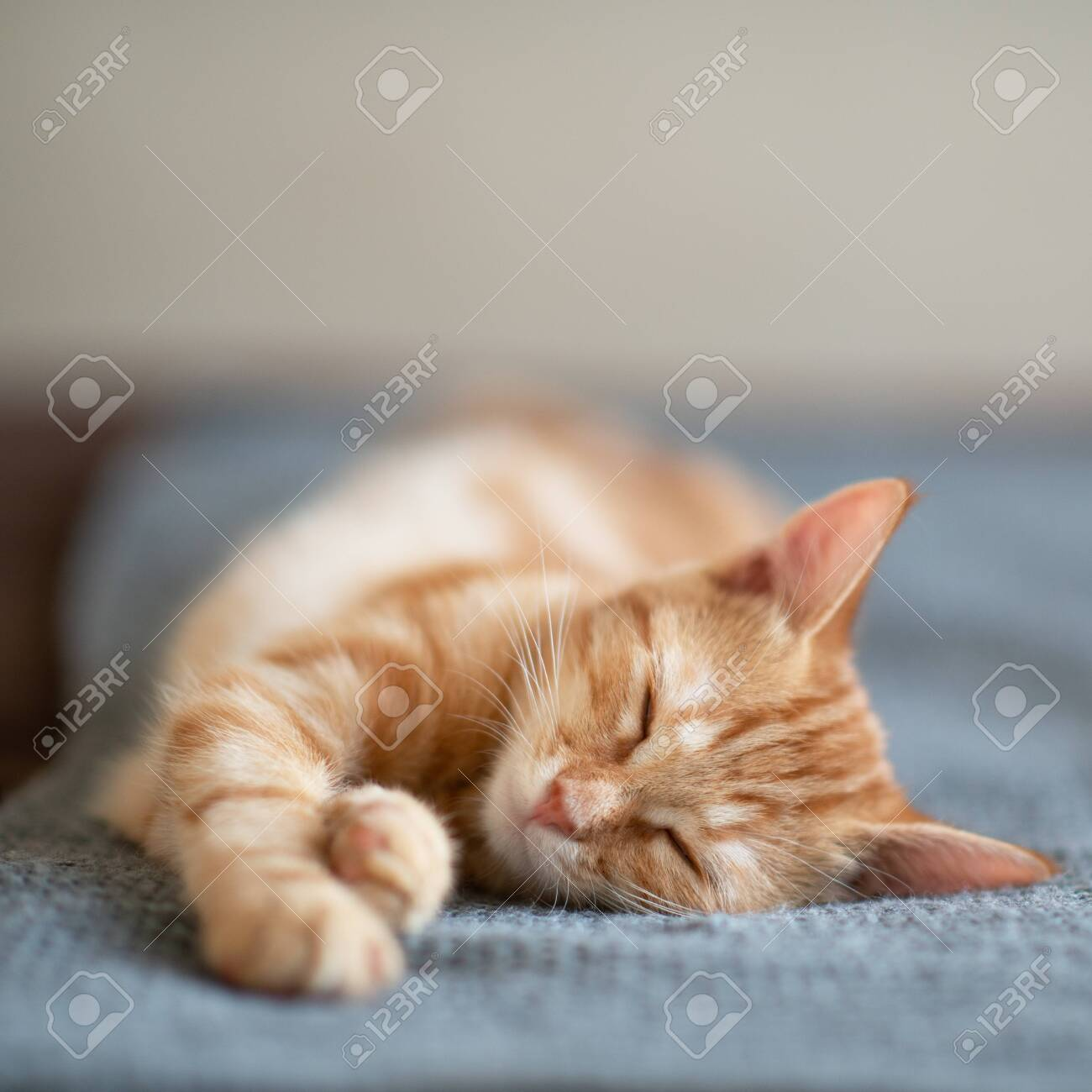 Cute red kitten with classic marble pattern sleeps on sofa. Adorable little pet. Cute child animal - 141757858